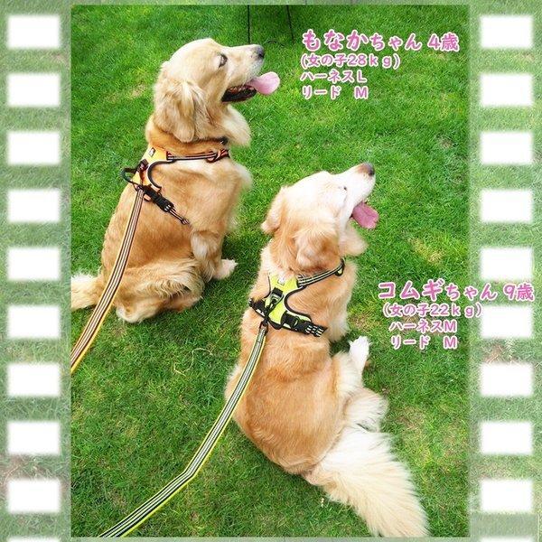 犬 リード 犬用 リード 中型犬 大型犬 持ちやすい ソフトハンドル おしゃれ 超大型犬 小型犬 スタンダードリード メール便送料無料 wanwan-square-garden 12
