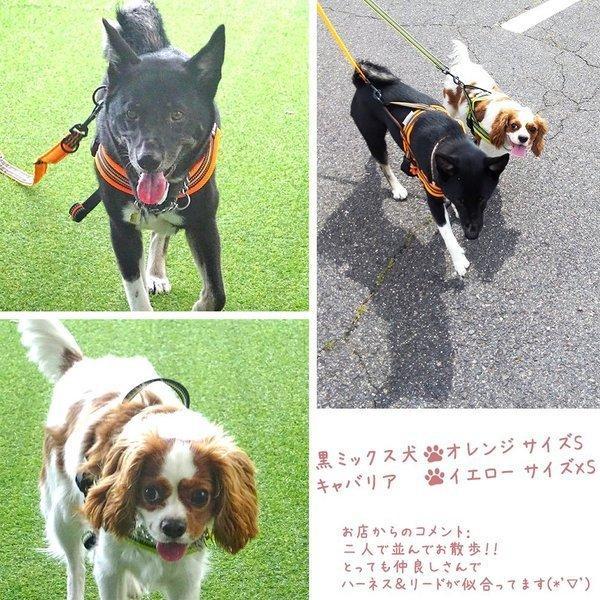 犬 リード 犬用 リード 中型犬 大型犬 持ちやすい ソフトハンドル おしゃれ 超大型犬 小型犬 スタンダードリード メール便送料無料 wanwan-square-garden 14