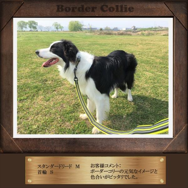 犬 リード 犬用 リード 中型犬 大型犬 持ちやすい ソフトハンドル おしゃれ 超大型犬 小型犬 スタンダードリード メール便送料無料 wanwan-square-garden 15