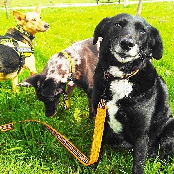 犬 リード 犬用 リード 中型犬 大型犬 持ちやすい ソフトハンドル おしゃれ 超大型犬 小型犬 スタンダードリード メール便送料無料 wanwan-square-garden 16