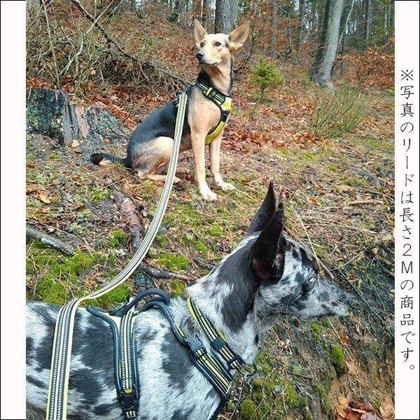 犬 リード 犬用 リード 中型犬 大型犬 持ちやすい ソフトハンドル おしゃれ 超大型犬 小型犬 スタンダードリード メール便送料無料 wanwan-square-garden 17