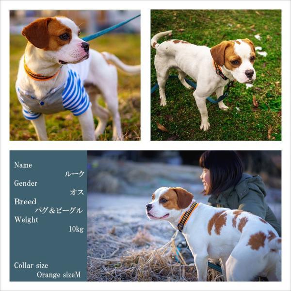 犬 リード 犬用 リード 中型犬 大型犬 持ちやすい ソフトハンドル おしゃれ 超大型犬 小型犬 スタンダードリード メール便送料無料 wanwan-square-garden 10