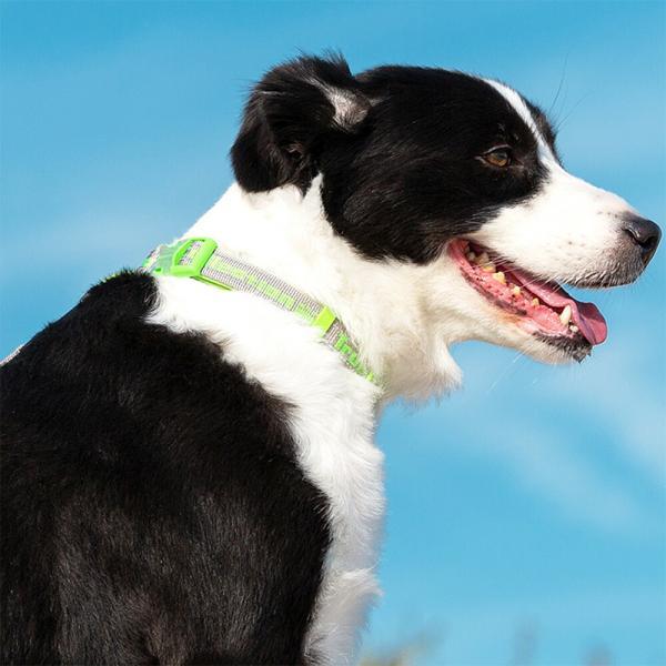 犬 首輪 軽い おしゃれ 痛くない 中型犬 大型犬 超大型犬 小型犬 ネオプレン ソフトパッド 丈夫 ワイドアジャスター 送料無料|wanwan-square-garden|09