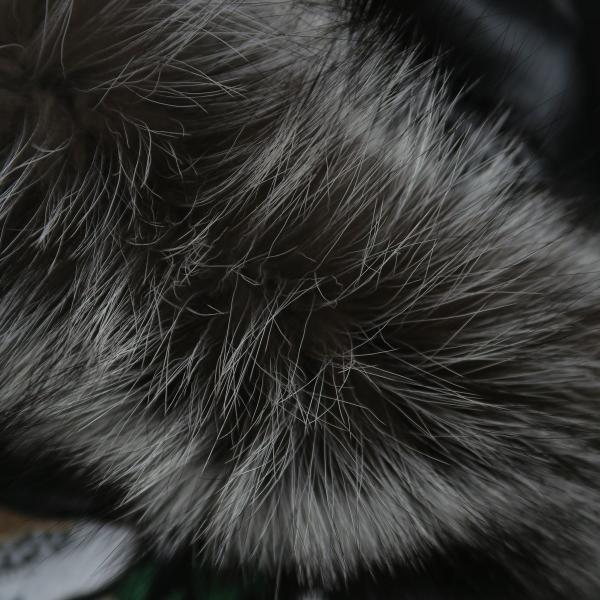 バーニヴァーノ ダウンジャケット Lサイズ 黒 毛皮 BAW-HDB3002-09 BARNI VARNO 新作 wanwan 10
