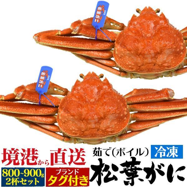 茹で 冷凍 松葉ガニ 約800〜900g 2杯セット  送料無料 まつば がに マツバ ガニ 蟹 ボイル 年中発送OK 売り切り終了