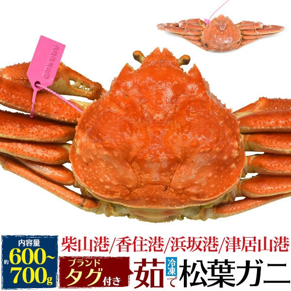 高級国産 産地証明タグ付き 茹で冷凍 松葉ガニ(ズワイガニ) 姿 約600〜700g  産地直送