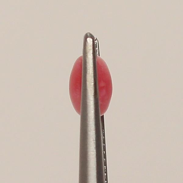 コンクパールルース0.38ct 火炎模様 4.3mm×3.6m×2.9mm|wizem|03