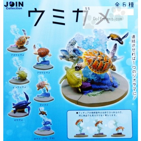 Join collection ウミガメ