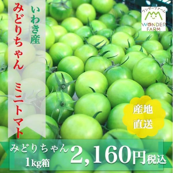 ミニトマト 贈答 みどりちゃん 1kg箱 ワンダーファーム 産地直送 お取り寄せ野菜|wonderfarm