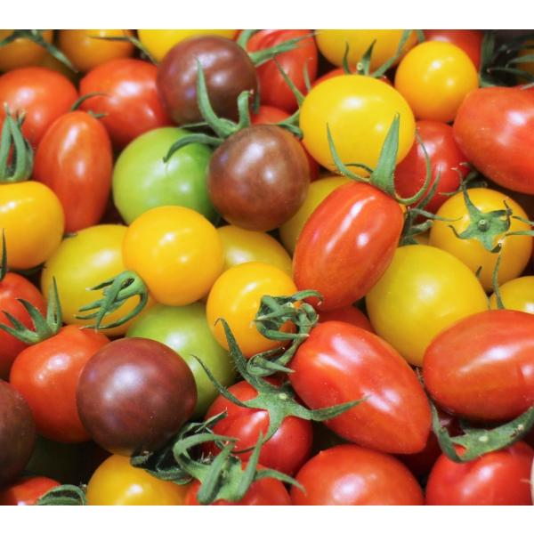 ミニトマトミックス 1.7kg詰め(トマトの宝石箱) お取り寄せ野菜 ワンダーファーム 贈答  「ふくしまプライド。体感キャンペーン(果物/野菜)」 wonderfarm 02