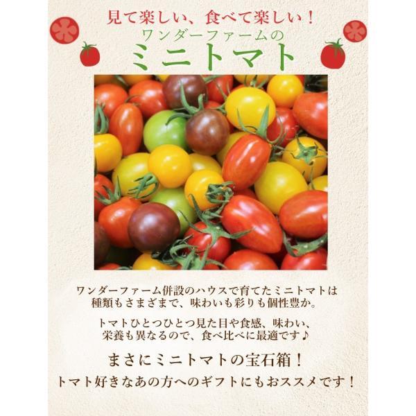 ミニトマトミックス 1.7kg詰め(トマトの宝石箱) お取り寄せ野菜 ワンダーファーム 贈答  「ふくしまプライド。体感キャンペーン(果物/野菜)」 wonderfarm 03