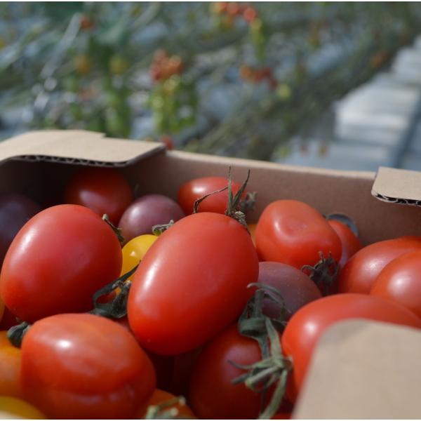 ミニトマト 贈答 ミニトマトミックス1kg詰め(トマトの宝石箱) お取り寄せ野菜 ワンダーファーム|wonderfarm|02