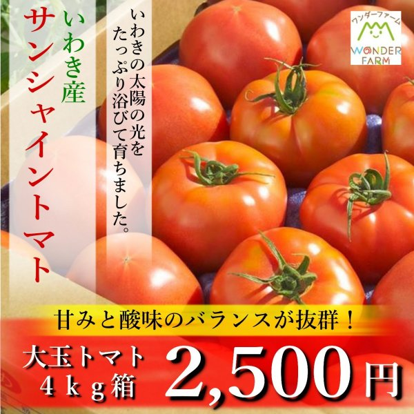 ギフト トマト 大玉トマト4kg箱(サンシャイントマト) お取り寄せ野菜 ワンダーファーム|wonderfarm