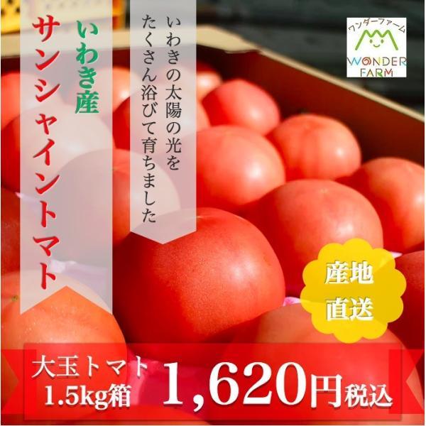 ギフト トマト 大玉トマト1.5kg箱(サンシャイントマト) お取り寄せ野菜 ワンダーファーム|wonderfarm