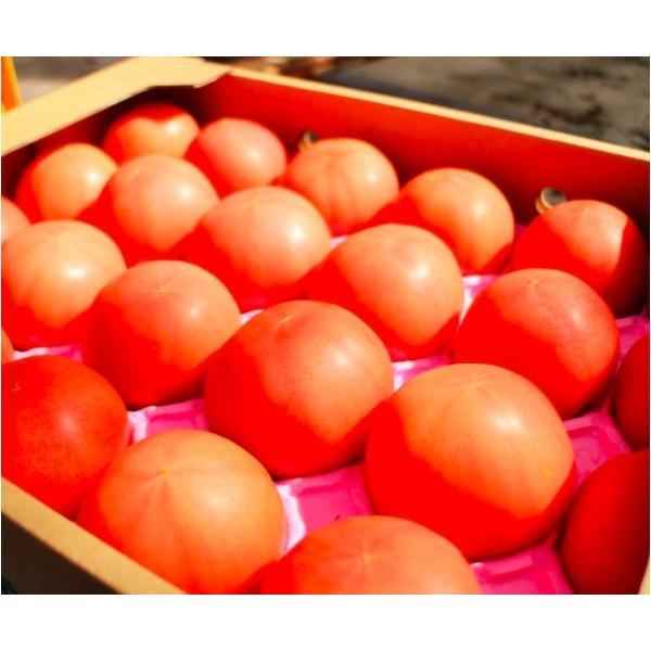 ギフト トマト 大玉トマト1.5kg箱(サンシャイントマト) お取り寄せ野菜 ワンダーファーム|wonderfarm|02