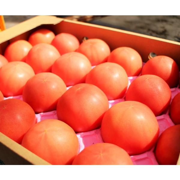 ギフト トマト 大玉トマト4kg箱(サンシャイントマト) お取り寄せ野菜 ワンダーファーム|wonderfarm|02