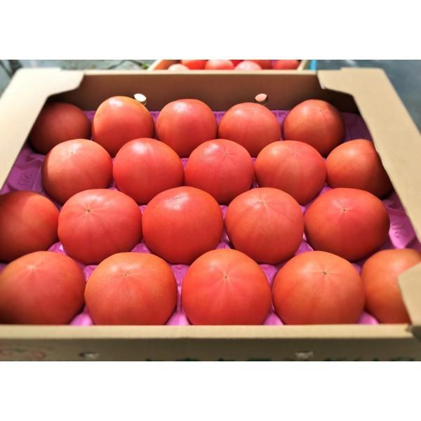 ギフト トマト 大玉トマト4kg箱(サンシャイントマト) お取り寄せ野菜 ワンダーファーム|wonderfarm|03