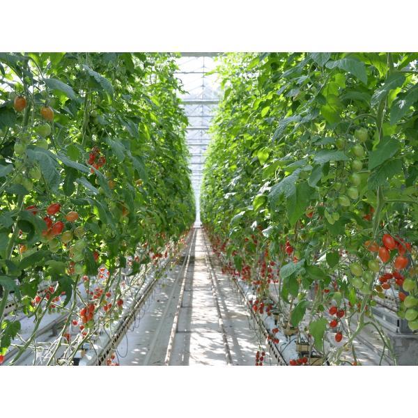 プレミアムトマトジュース160g(食塩無添加)ワンダーファーム ポイント消化|wonderfarm|03