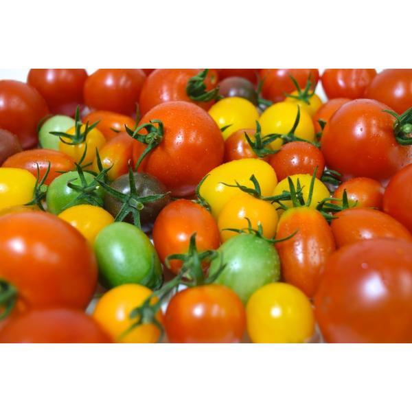 お歳暮 ギフト プレミアムトマトジュース500g(食塩無添加)ワンダーファーム 贈答|wonderfarm|02