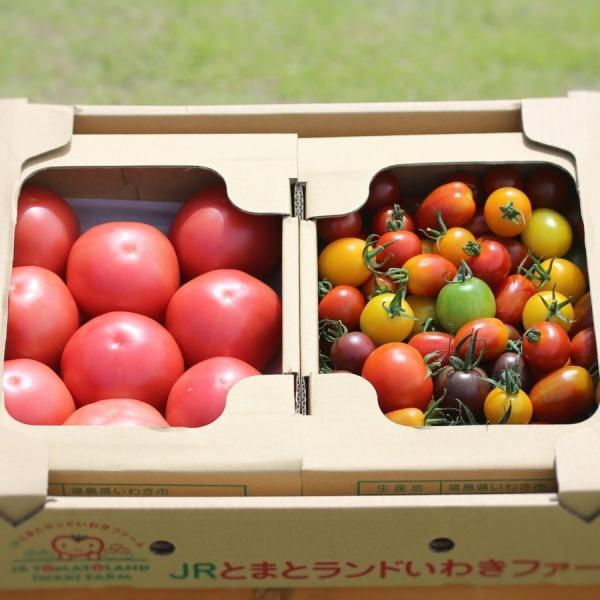 サンシャイントマト詰め合わせ3kg (大玉・中玉・ミニ) お取り寄せ野菜 ワンダーファーム|wonderfarm