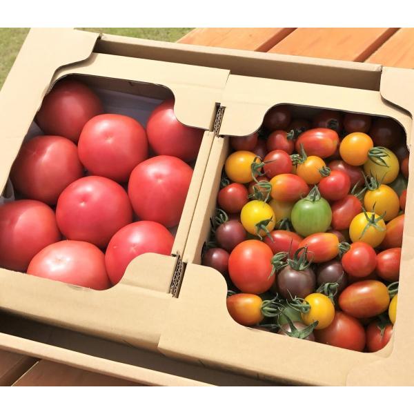 サンシャイントマト詰め合わせ3kg (大玉・中玉・ミニ) お取り寄せ野菜 ワンダーファーム|wonderfarm|02