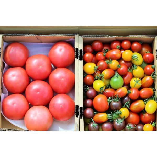 サンシャイントマト詰め合わせ3kg (大玉・中玉・ミニ) お取り寄せ野菜 ワンダーファーム|wonderfarm|04