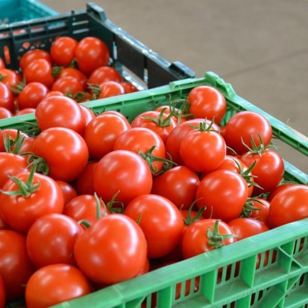 ギフト トマト 中玉トマト3kg箱詰め (フルティカトマト) お取り寄せ野菜 ワンダーファーム