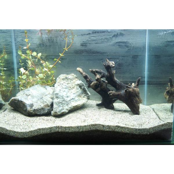 流木沈む流木アクアリウム熱帯魚水槽レイアウトアク抜き処理済水草ディスプレイ自然インテリアメダカ282