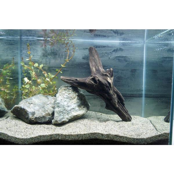 流木沈む流木アクアリウム熱帯魚水槽レイアウトアク抜き処理済水草ディスプレイ自然インテリアメダカ283