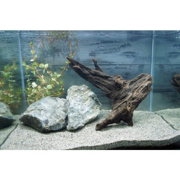 流木沈む流木アクアリウム熱帯魚水槽レイアウトアク抜き処理済水草ディスプレイ自然インテリアメダカ285