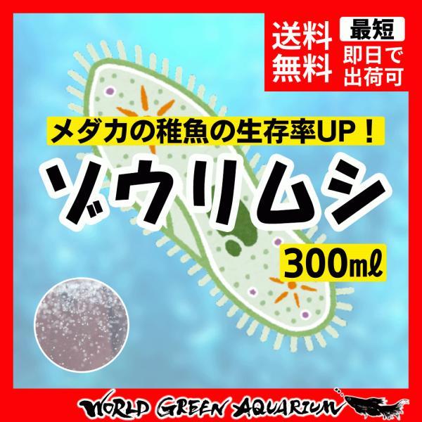  【送料無料】目玉商品 簡単にふえるゾウリムシ300ml+ゾウリムシの餌 培養説明書付き 【メダカの…