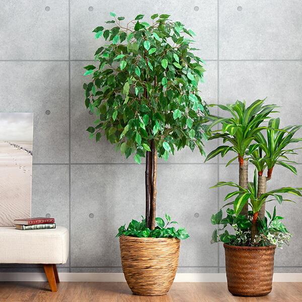人工観葉植物 大型 光触媒 ベンジャミン 幸福の木 ドラセナ 2本セット インテリアグリーン フェイクグリーン  送料無料