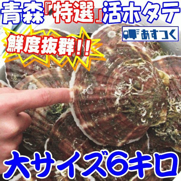 ホタテ 殻付き 活ほたて 大サイズ6キロ 青森 陸奥 貝柱が美味 (約30枚前後入り) お取り寄せ