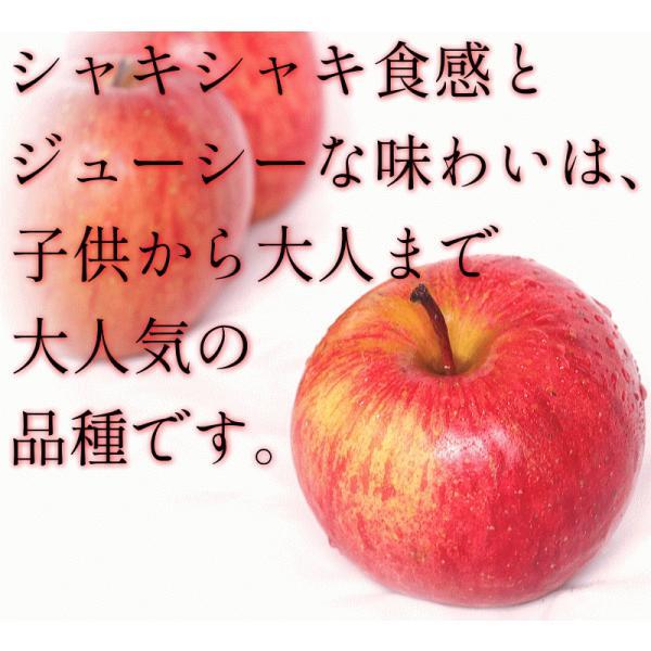 りんご 3kg箱 訳あり 送料無料 青森 リンゴ 3キロ箱 サンふじ 大小様々|world-wand|07