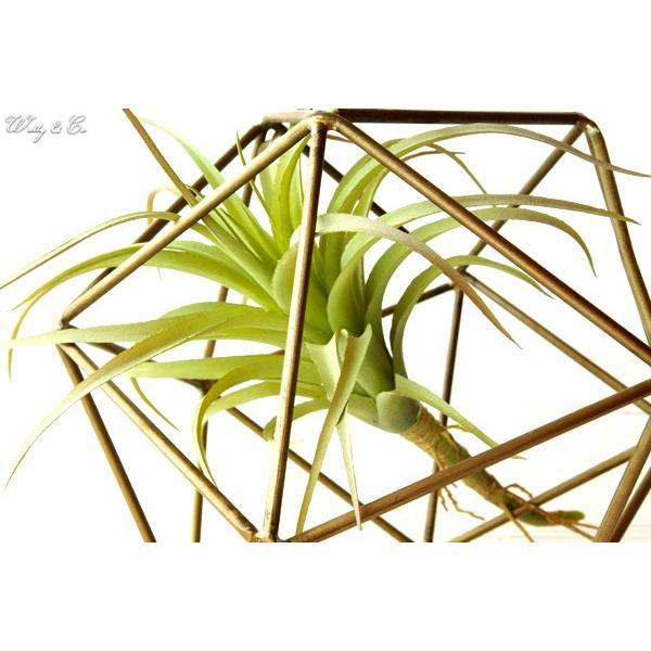 人工観葉植物 エアプランツ + 多面体フレーム セット ( フェイクグリーン オブジェ 置物 吊り下げ ハンギング ) wutty 02