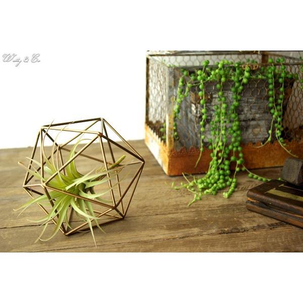 人工観葉植物 エアプランツ + 多面体フレーム セット ( フェイクグリーン オブジェ 置物 吊り下げ ハンギング ) wutty 05