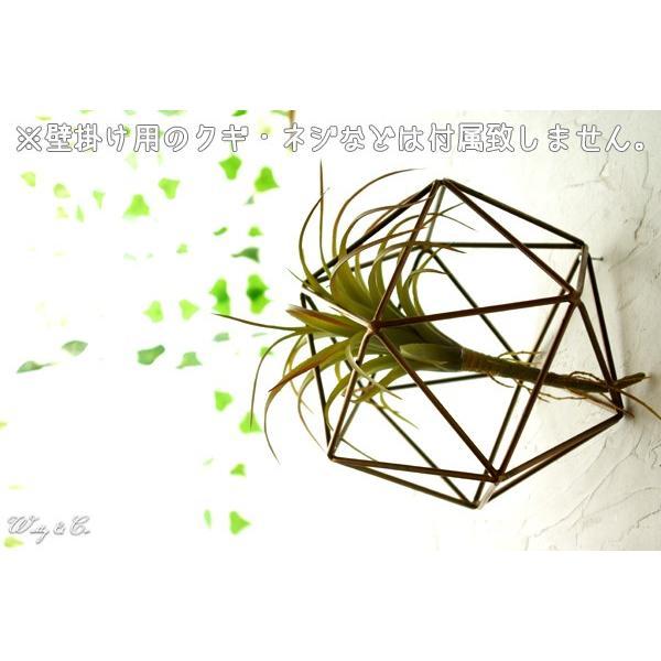 人工観葉植物 エアプランツ + 多面体フレーム セット ( フェイクグリーン オブジェ 置物 吊り下げ ハンギング ) wutty 06