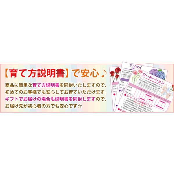 ミニ盆栽:五葉松(瀬戸焼小鉢)*祝い ギフト gift 誕生日祝 御祝 プレゼントにも y-bonsai 05