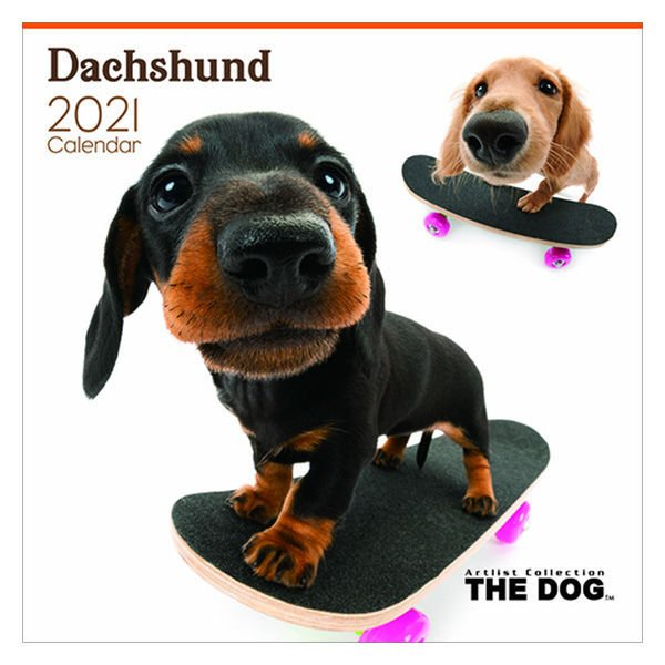【セール】2021年 壁掛けカレンダー THE DOG ダックスフンド 325×300×4mm わくわく製作所