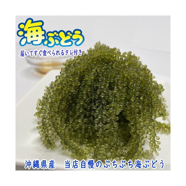 沖縄県産 海ぶどう 50g シール付き 化粧箱なし 届いてすぐ食べられるタレ付き うみぶどう