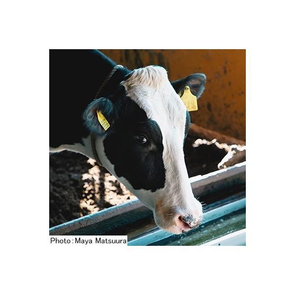 嬉野市 ふるさと納税 【酪農家の手作り】出来立てうれしのチーズ5種セット|y-sf|03