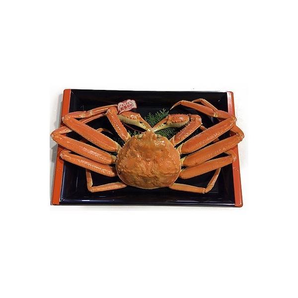 北栄町 ふるさと納税 鳥取県産タグ付きボイル松葉ガニ特大1枚(900g〜1kg)|y-sf