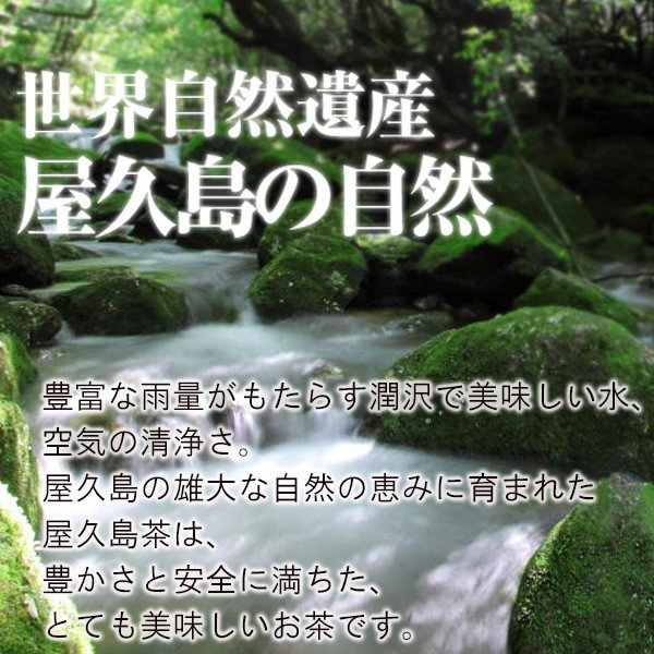 お茶屋さんがひそかに飲むお茶 2袋セット  / 無農薬 / 有機栽培 / 産地直送|yakushimashop|07