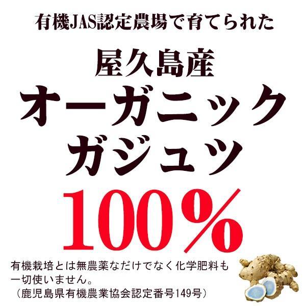 屋久島紫ウコン(ガジュツ)粉末(100g) / 無農薬 / 有機栽培 / 産地直送 yakushimashop 02