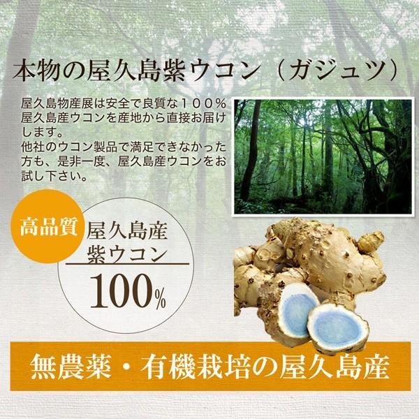屋久島紫ウコン(ガジュツ)粉末(100g) / 無農薬 / 有機栽培 / 産地直送 yakushimashop 13