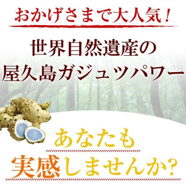 屋久島紫ウコン(ガジュツ)粉末(100g) / 無農薬 / 有機栽培 / 産地直送 yakushimashop 08