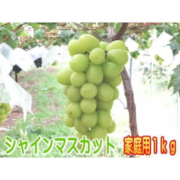 【家庭用】温室栽培シャインマスカット信州長野県産、1kg!7月中旬〜下旬発送予定!