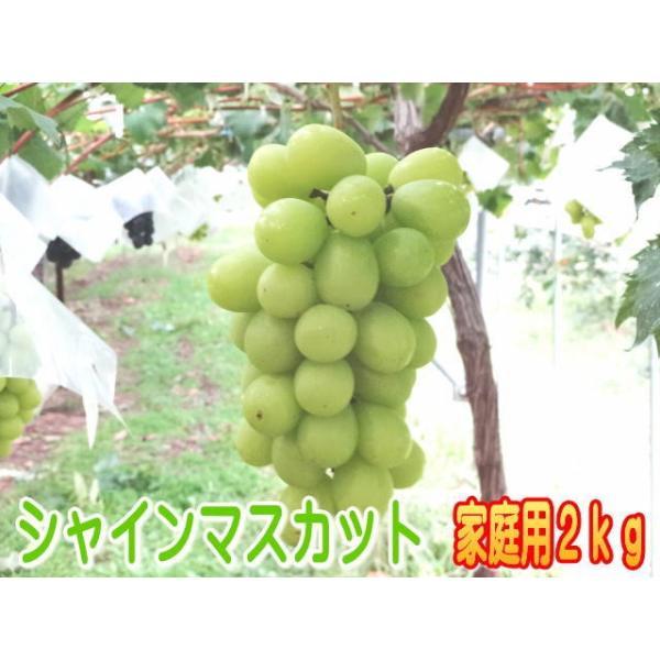 【家庭用】温室栽培シャインマスカット信州長野県産2kg!7月中旬から発送予定!