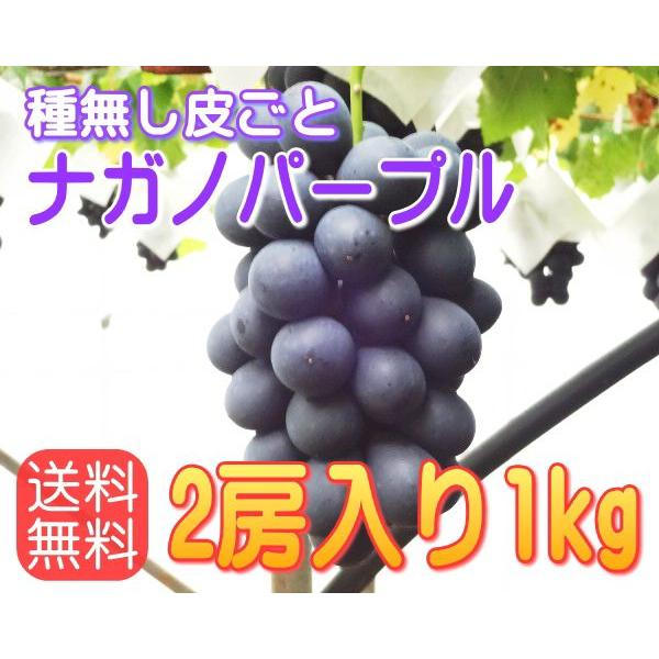 【送料無料】ナガノパープル信州長野県産、1kg!9月上〜中旬から順次発送!