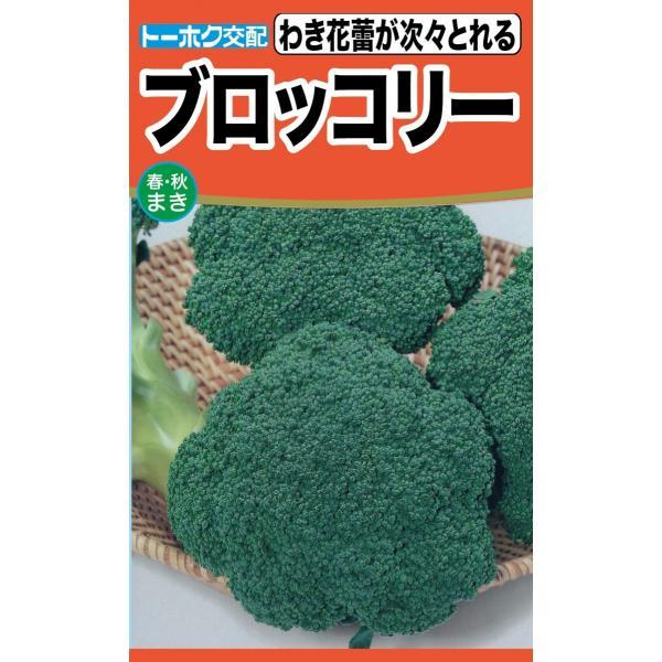 ブロッコリー種 中早生種(緑積) トーホク